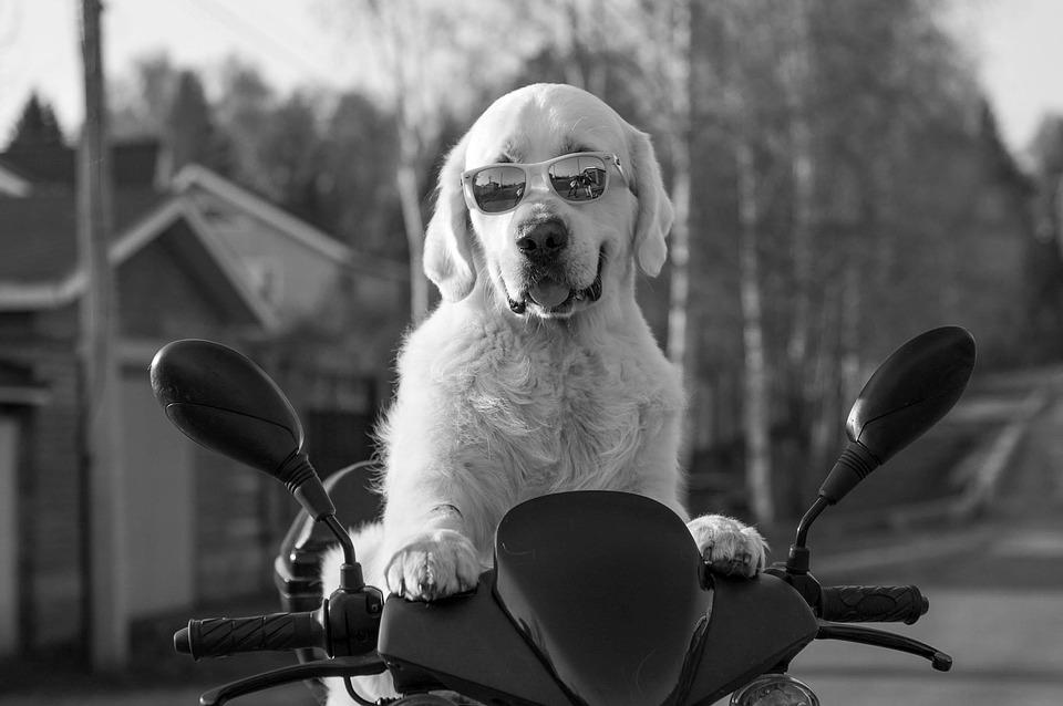 犬 スクーター