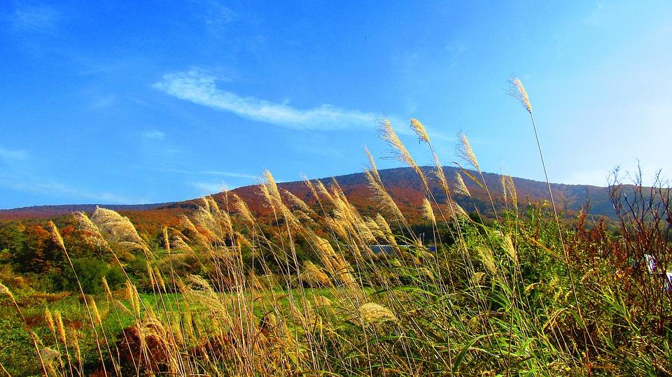 日本の秋 青空 風景 雲 日本 スカイブルー 自然 秋の始まり 日差し 八甲田 青森県