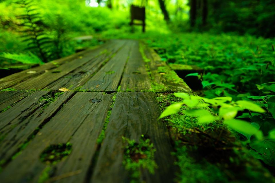 自然 日本 湿地帯 トトロの森 狭山丘陵
